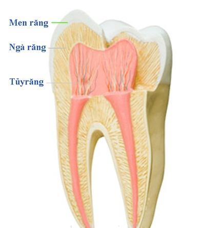 điều trị tuỷ răng tại nha khoa sài gòn